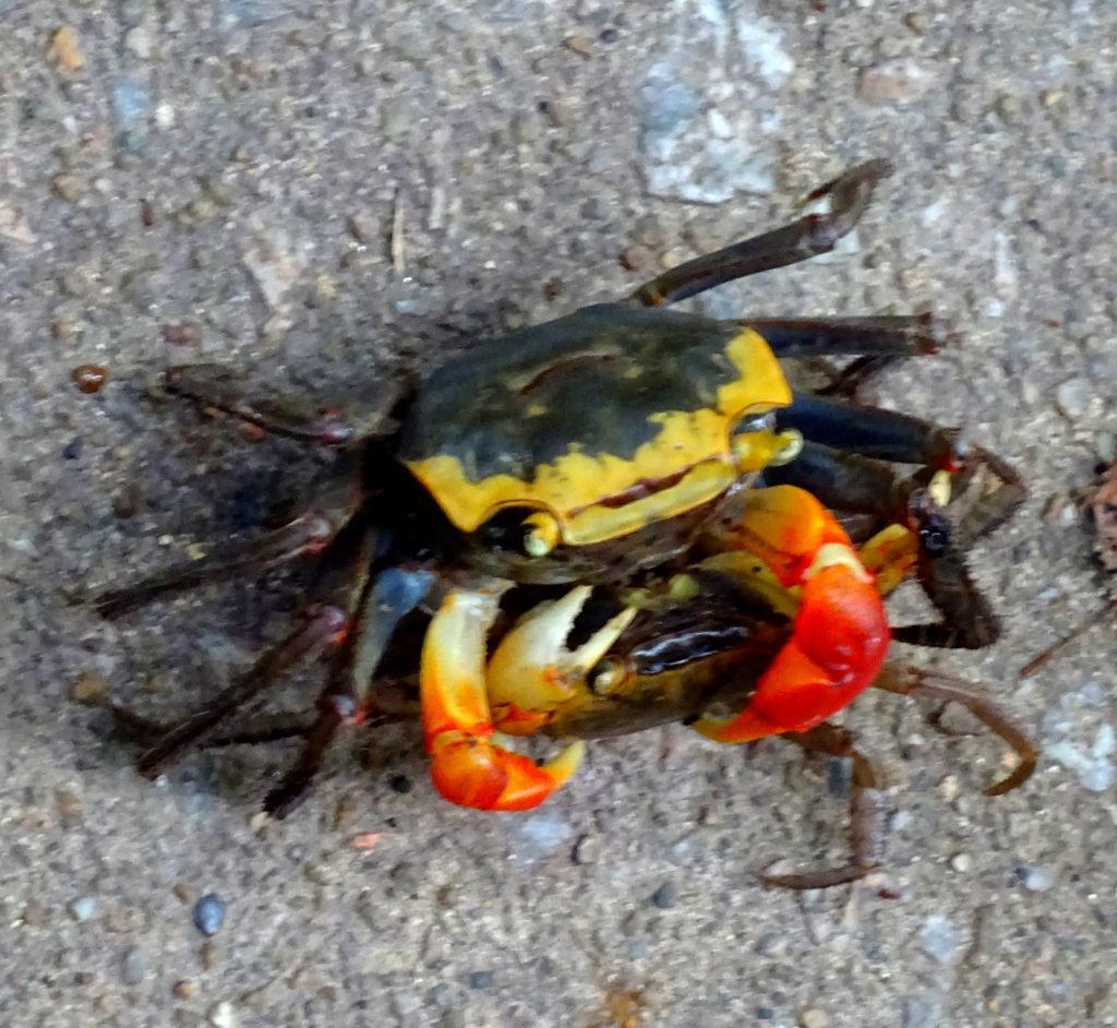 Crabs on Lamma Island